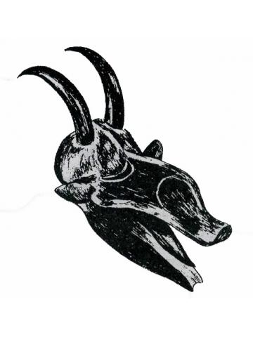 Символ быка в Африке