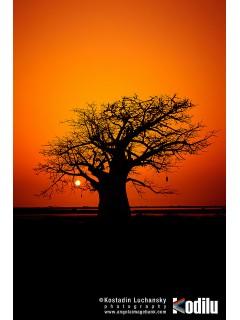 Дерево для африканских масок и статуэток