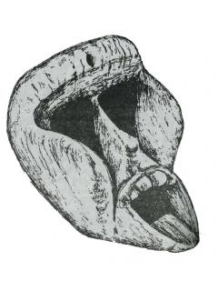 Маска лесного духа Гуэре (нгере)