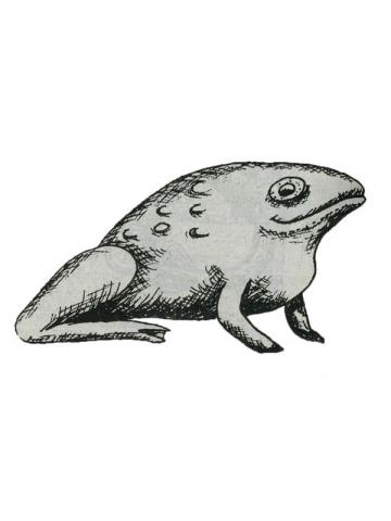 Что означает лягушка в Африке. Энциклопедия символов