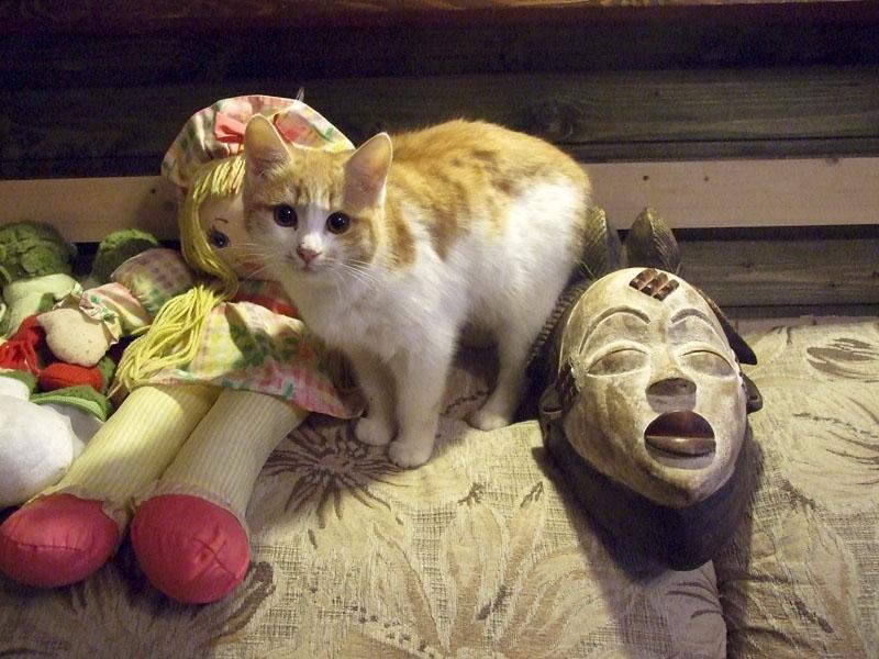 Кошка Сигма и африканская маска Punu (Габон)