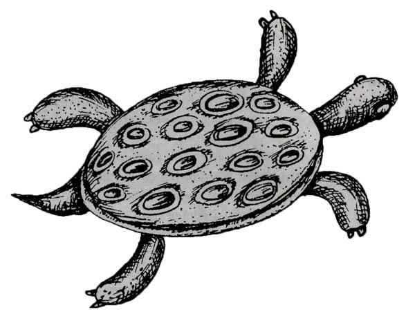 Черепаха: ум и благообразие. Символы Африки
