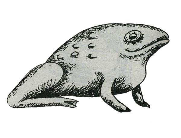 Лягушка: воскрешение мертвых. Символы Африки