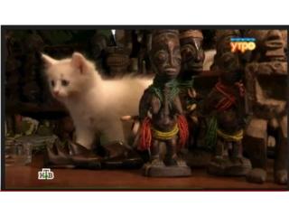 «Афроарт» в сюжете телеканала НТВ
