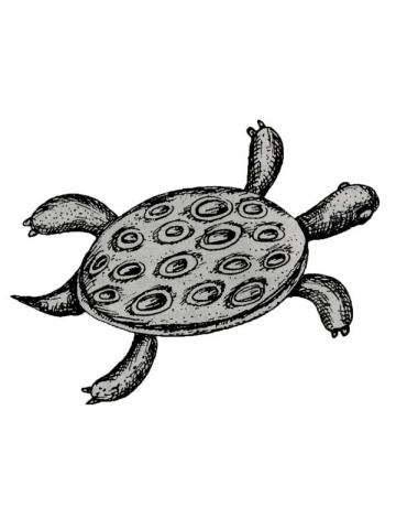 Что означает черепаха в Африке. Энциклопедия символов