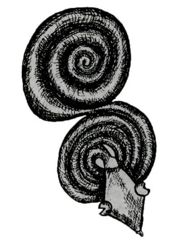 Что означает змея в Африке. Энциклопедия символов